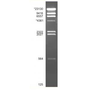 Lambda/HindIII 500 µl (100 reações)